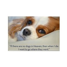 Cavalier King Charles Spaniel in  Rectangle Magnet