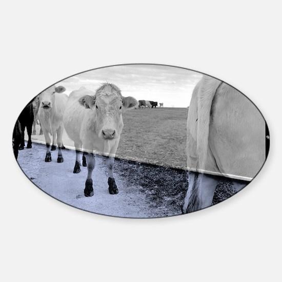 Cele Cows 001x3 Sticker (Oval)