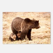 Grizzly Bear with cubs Postcards (Package of 8)