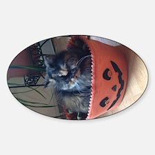 bibi pumpkin Sticker (Oval)