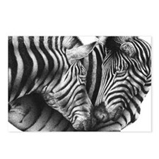 Zebras Rectangle Cocktail Postcards (Package of 8)