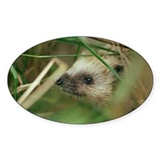 European hedgehog Decal