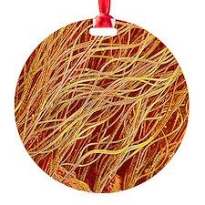 Fox fur, SEM Ornament