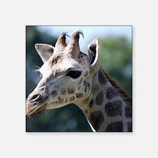 "Giraffe King Duvet Square Sticker 3"" x 3"""