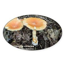 Orange Grisette Decal