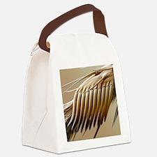 Fruit fly sex comb, SEM Canvas Lunch Bag