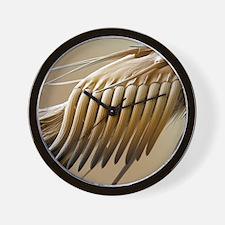 Fruit fly sex comb, SEM Wall Clock