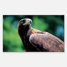 Golden eagle Decal