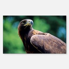 Golden eagle Sticker (Rectangle)