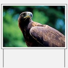 Golden eagle Yard Sign