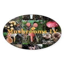 Eastern North America mushrooms Decal