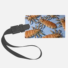Head lice, artwork Luggage Tag