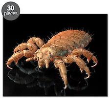 Head louse, artwork Puzzle