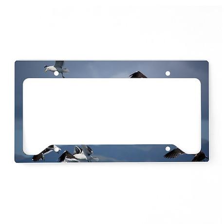 Kelp gulls License Plate Holder