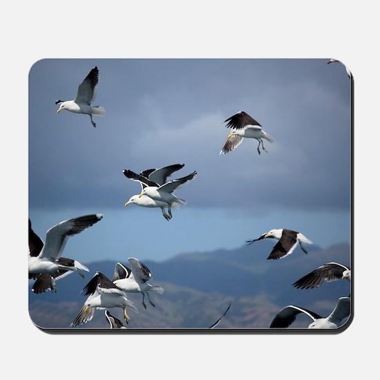 Kelp gulls Mousepad