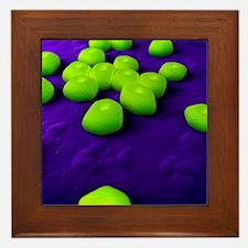 Acinetobacter bacteria, artwork Framed Tile