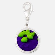 Acinetobacter bacteria, artwor Silver Round Charm