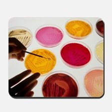 Petri dish bacterial cultures, picking a Mousepad