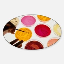 Petri dish bacterial cultures, pick Sticker (Oval)