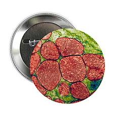 "Mitochondria, TEM 2.25"" Button"