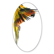 Sun Conure in flight Steve Duncan Decal