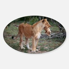 Lioness and cub Sticker (Oval)