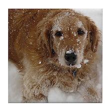 Golden Retriever in the snow Tile Coaster