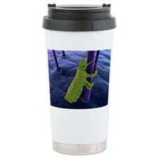 Head louse, artwork Travel Mug