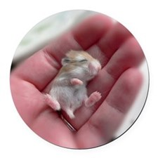 Adorable Sleeping Baby Hamster Round Car Magnet