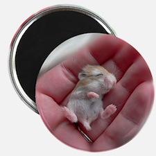 Adorable Sleeping Baby Hamster Magnet
