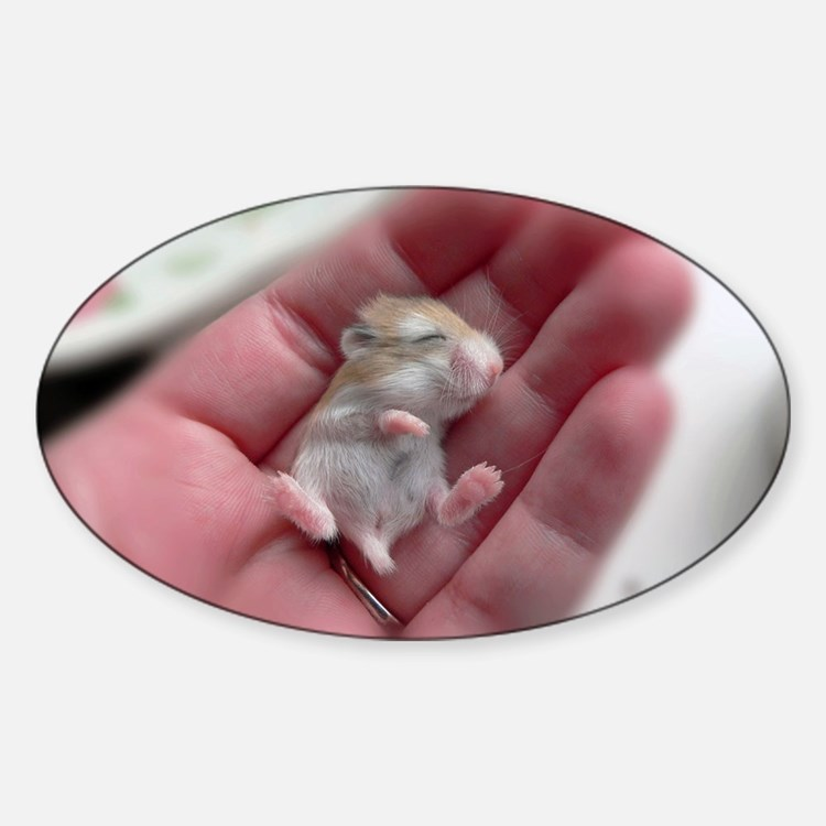 Adorable Sleeping Baby Hamster Sticker (Oval)