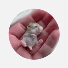 "Adorable Sleeping Baby Hamster 3.5"" Button"