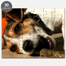 Jack Russell Terrier Puppy Chewing Stick Puzzle