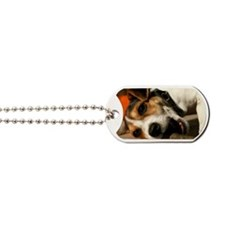 Jack Russell Terrier Puppy Chewing Stick Dog Tags