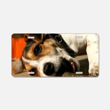 Jack Russell Terrier Puppy  Aluminum License Plate