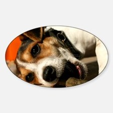 Jack Russell Terrier Puppy Chewing  Decal