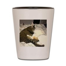The cats Shot Glass