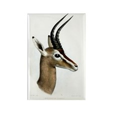 Antelope Illustration Rectangle Magnet
