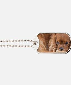 Sweet Friend Ruby Cavalier King Charles S Dog Tags