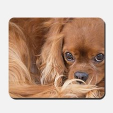 Sweet Friend Ruby Cavalier King Charles  Mousepad
