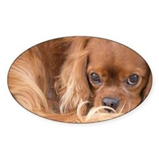 Sweet Friend Ruby Cavalier King Cha Decal