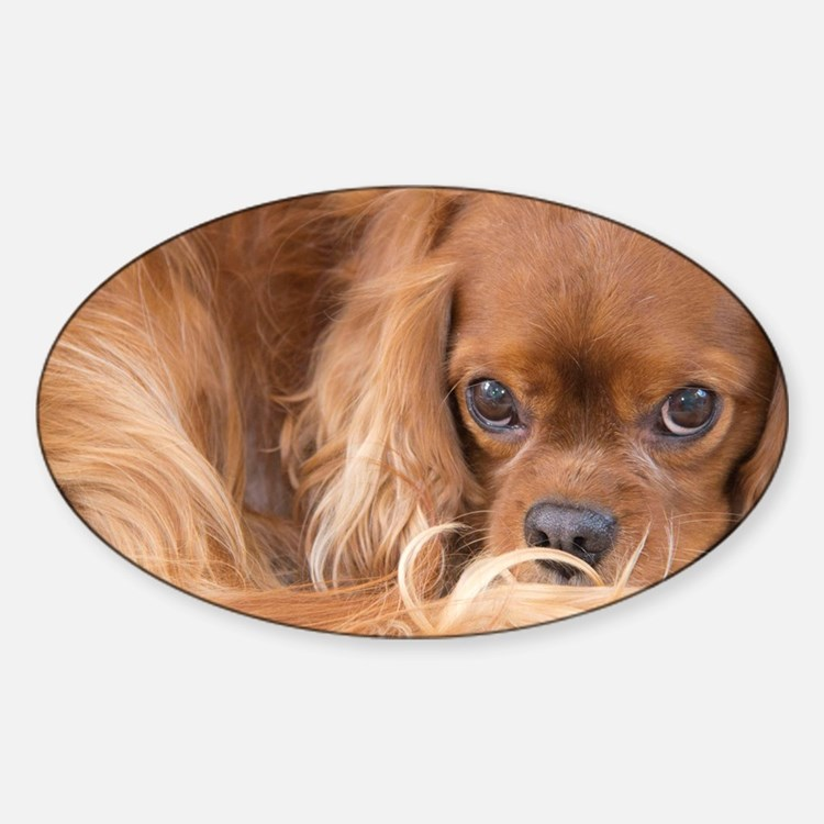 Sweet Friend Ruby Cavalier King Cha Sticker (Oval)