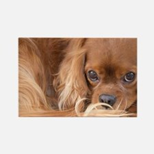 Sweet Friend Ruby Cavalier King C Rectangle Magnet