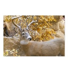 Amazing Big Buck Postcards (Package of 8)