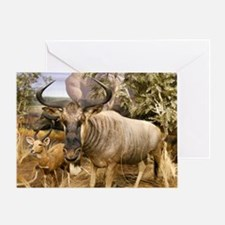 Wildebeest In The Wild Greeting Card