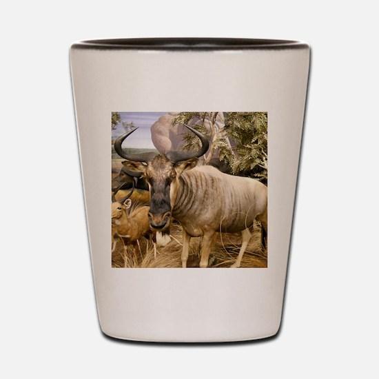 Wildebeest In The Wild Shot Glass