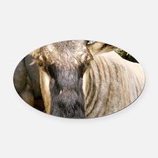 Wildebeest Oval Car Magnet
