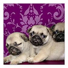 """Pug Puppies Square Car Magnet 3"""" x 3"""""""