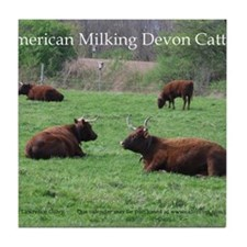 Milking Devon Cattle Tile Coaster