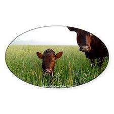 Milking Devon Cattle Decal